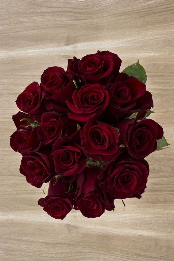 Black Baccara is a very deep dark red rose. Its darkness makes it a very stylish and formal flower.  This the darkest natural red rose of our cataloge.