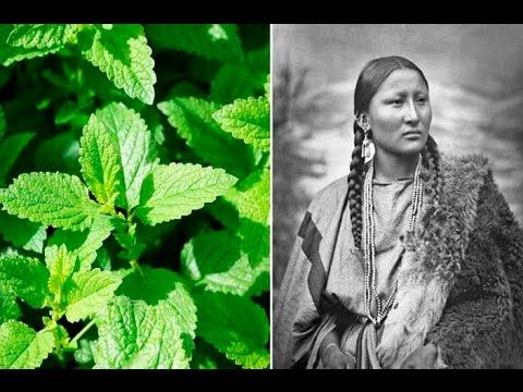 6 Plants Native Americans Use To Cure Everything - pick only 1/3 of plants, Blackberry, berries, leaves & root decoction, Hummingbird blossom, Sumac, wild ginger root, wild rose, yellow dock leaves as spinach,