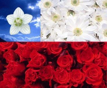 Love Chile