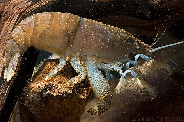how to make a crawfish pond