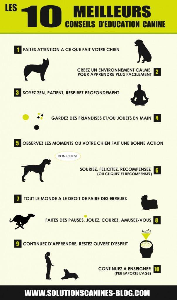 10 meilleurs conseils deducation canine
