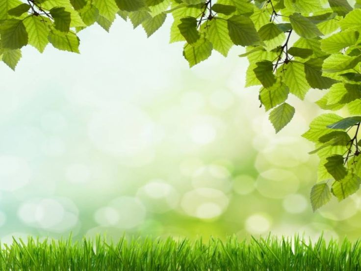 Beautiful green grass PowerPoint background Available in