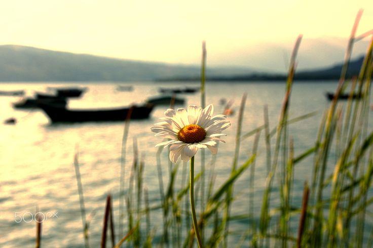 Prima del tramonto... sul lago