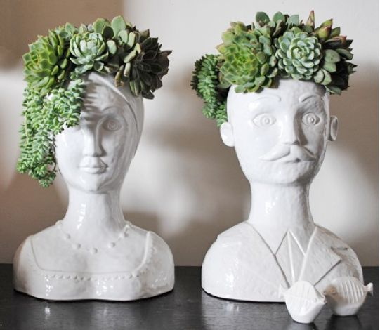 why darling, it appears as though we now have succulents for hair. how delightful! vaso, decoração