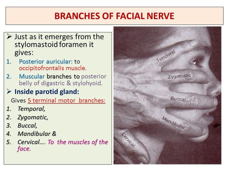 Facial implant company