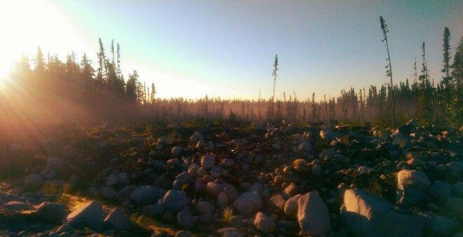Chibougamau forest