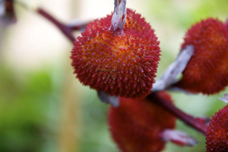 #red #botany