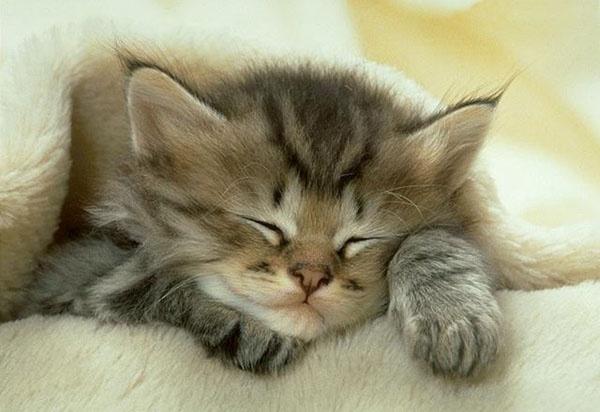 cat's soul
