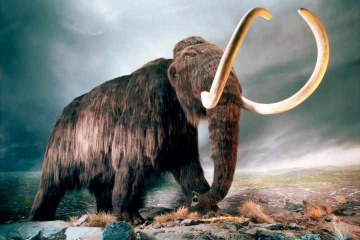 http://www.nms.ac.uk/explore/play/mammoths-of-the-ice-age/