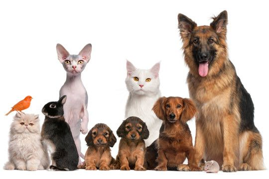 Photo of dogs and cats.