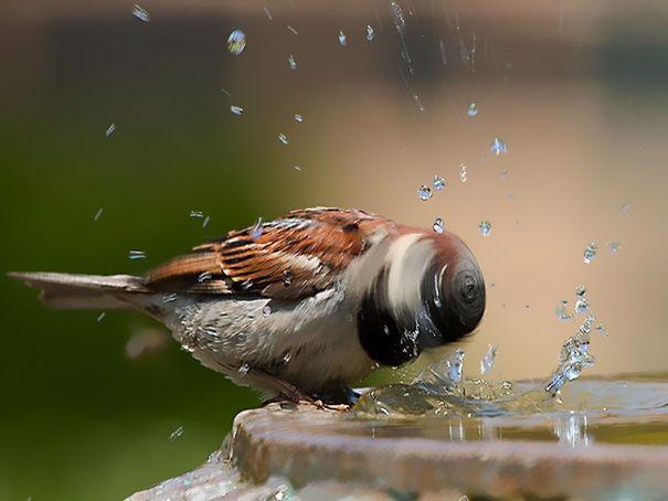 Shake it up birdy, now. Shake it up birdy...Twist and splash, twist and splash