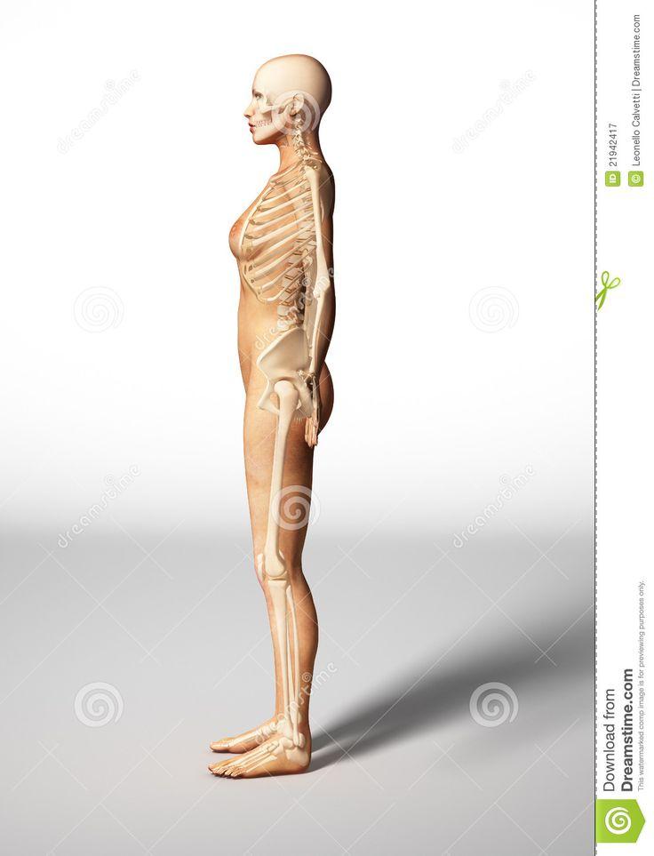 67 best Anatomie für Künstler images on Pinterest | Human figures ...