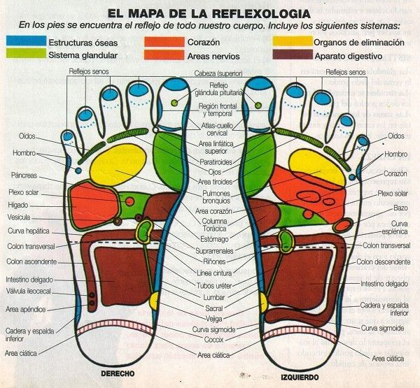 el mapa de la reflexología..