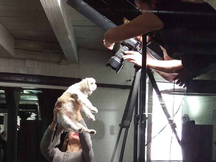 Auch der #Bürohund #Hund muss dabei sein beim großen #Fotoshooting für alle #Mitarbeiter