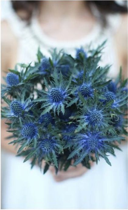 blue thistle bouquet...lovely lovely change from the mainstream. But mix it with some white flowers.