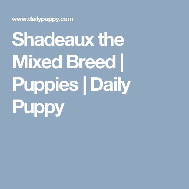 Shadeaux the Mixed Breed   Puppies   Daily Puppy