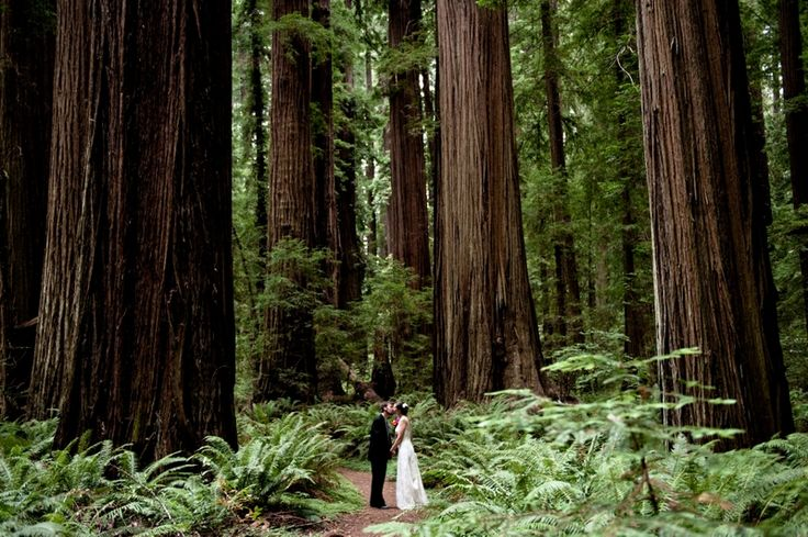 The Wedding Ones: Venues in the Redwoods