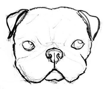 How To Draw Pug Head And Face Dog Face Drawing Drawing Base