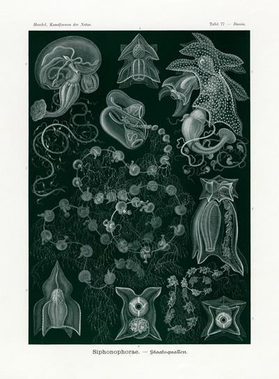 Haeckel Prints from Kunstformen der Natur 1899-1904 – De La Harpe Landscapes
