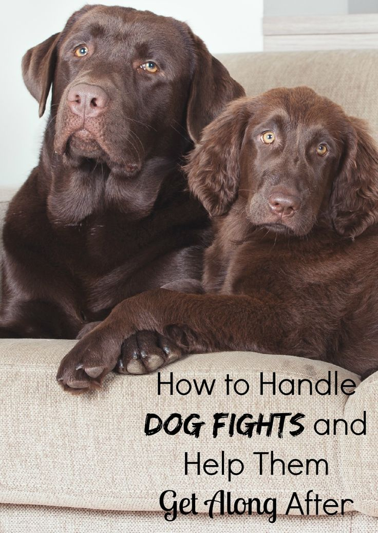 Scrapes at the park keeping you & your pooch home? Check out our tips on how to handle dog fights and help dogs get along better after the fight is over.