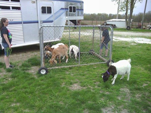 Portable Goat Pen Goat Tractor Dairy Goat Info Forum
