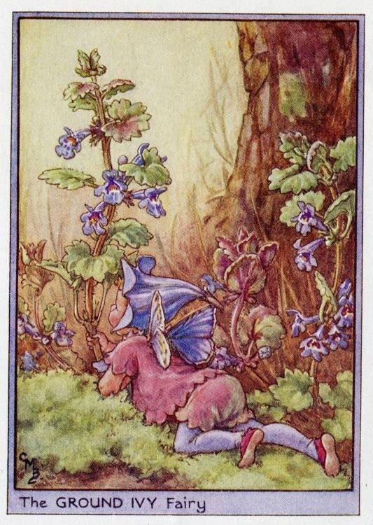 Grond Ivy Flower Fairy Vintage Print, c.1950 Cicely Mary Barker-boekillustratie plaat