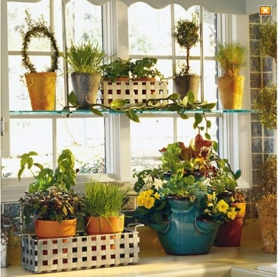 cute: Kitchens, Growing Herbs, Kitchen Window, Garden Window, Window Garden, Gardening, Gardens, Windows, Garden Houseplants