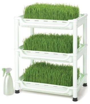 Never underestimate the power of wheatgrass! Here's a way for you to grow your own. It may be cheaper than buying it!