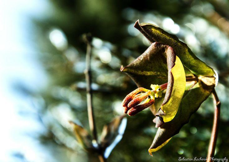 frozen, bud flower by Sebastian Lacherski on 500px