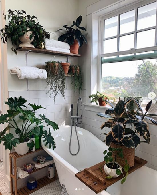 Plants for the bathroom turn it into a green oasis
