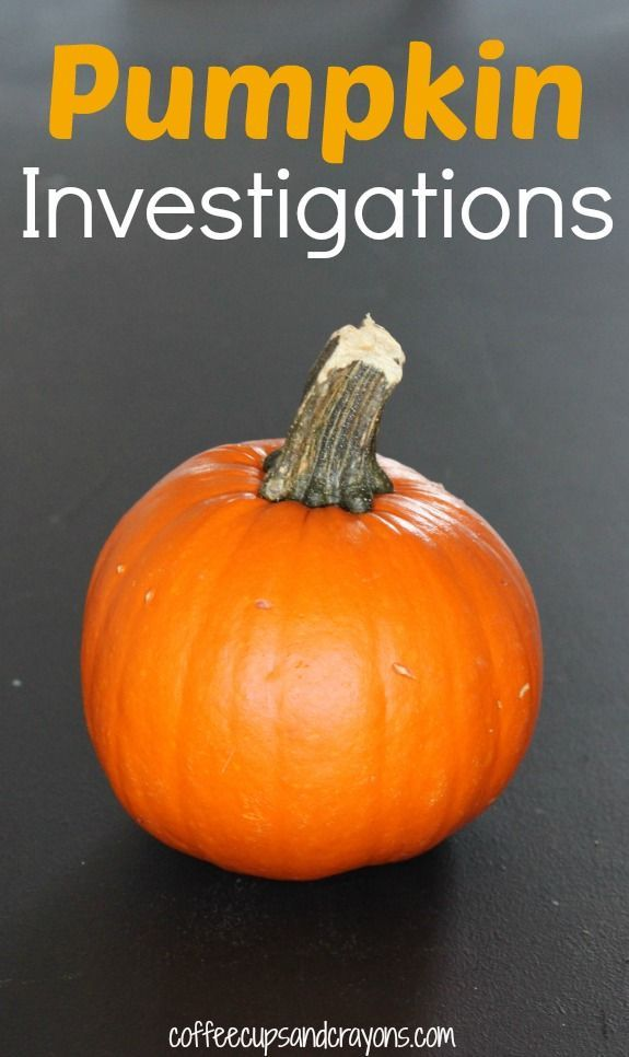 Pumpkin Investigations! Fun pumpkin themed science and math investigations with a #FreePrintable!