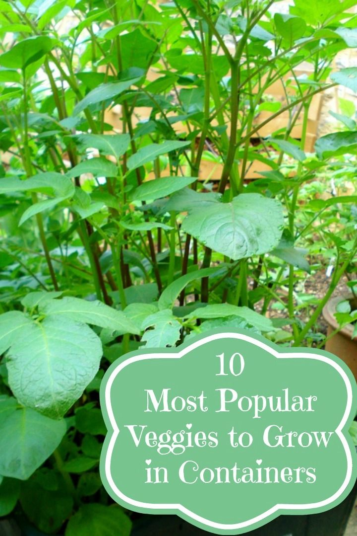 4670 Best Images About Gardening Tips Inspiration On Pinterest Raised Beds Gardening Hacks