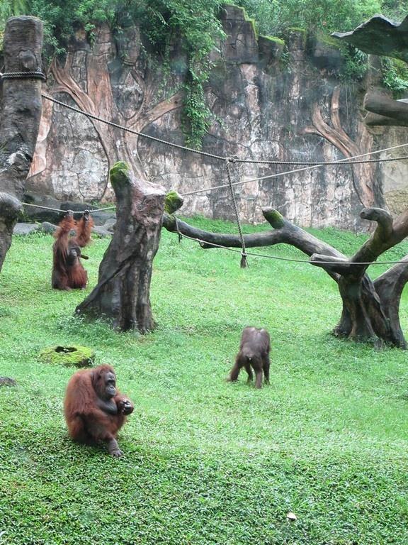 Taman safari, puncak, indonesia