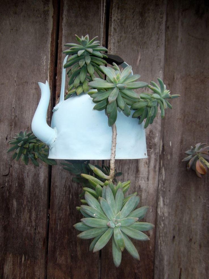 Una excelente decoración, la planta Crasa es un Graptosedum Francesco Baldi