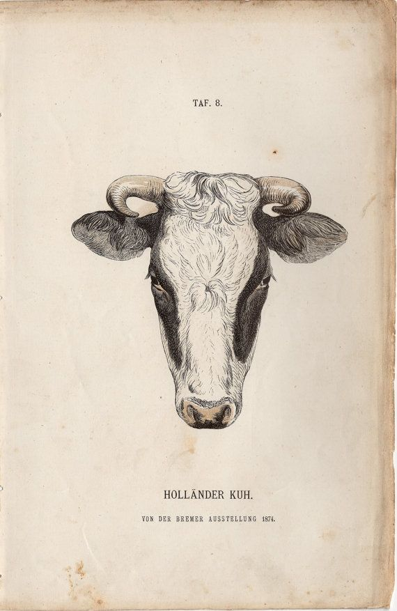 1885 Rare Antique Cattle Cow Print Engraving German Farming Rinderrassen by Martin Wilckens Holland Lithograph by TheLotAntiquePrints on Etsy