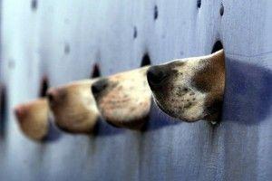 Unterdir les tests sur animaux : Les chiens étaient rasés et l'un d'eux avait été retrouvé congelé dans de l'azote liquide et plusieurs autres mutilés.
