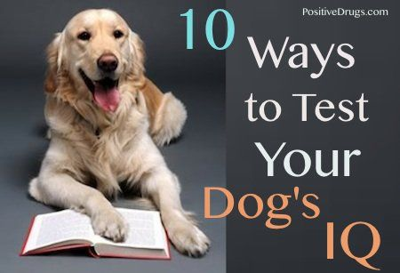 Determine how intelligent your dog is. Here are 10 ways to check your dog's IQ.