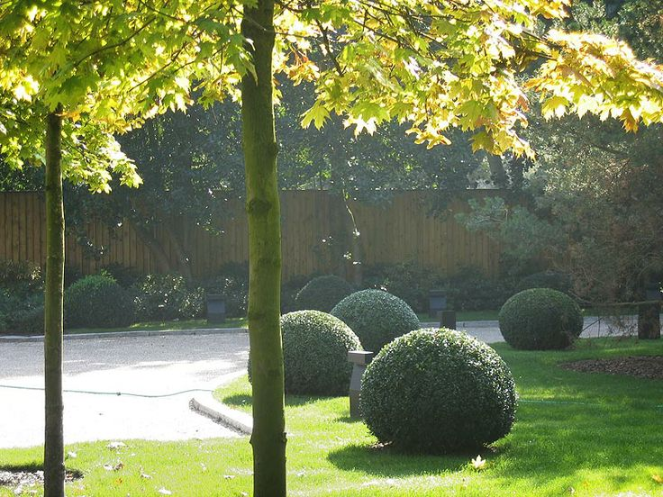 47 best images about drive way trees landscape ideas for Specimen trees