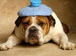 головная боль лечение, головная боль мигрень лечение, головная боль причины лечение, лечение головной боли народными средствами, народное ле...