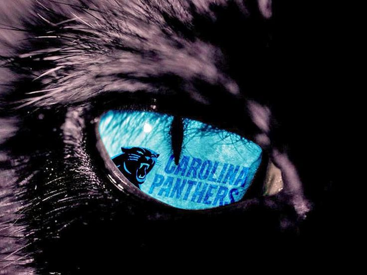 116 best everything carolina panthers images on pinterest cam eye of the panther voltagebd Image collections