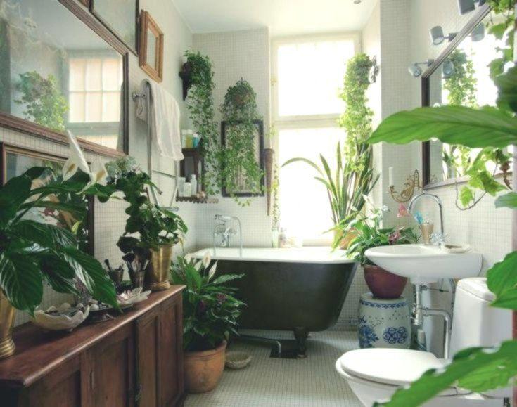 Pflanzen Badezimmer Pflanze Badezimmer Dunkel Pflanze Badezimmer Luftfeuchtigke Badezi Pflanzen Im Badezimmer Badezimmerpflanzen Badezimmer Ohne Fenster