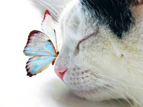 : Cats, Animals, Kitten, Butterfly Kisses, Sweet, Butterflies, Pet, Beautiful, Kitty