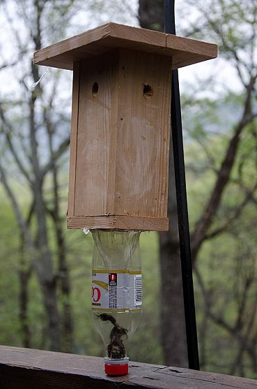 Bee trap!