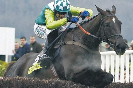 Denman (17.4.2000) by Presenting. Known as 'The Tank', Denman is widely known for his great rivalry with Kauto Star for the Cheltenham Gold Cup, ridden by Sam Thomas. A large horse with a front-running style in an attempt to run the finish out of his rivals, which he did to claim the Cheltenham Gold Cup in 2008. Owned by Paul Barber and Harry Findlay, and later in the sole ownership of Paul Barber, he was trained by Paul Nicholls.