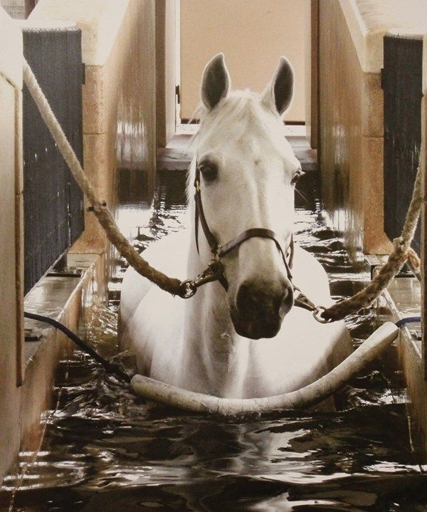 73 best Hospitals and Health Horses images on Pinterest Horses - equine veterinary nurse sample resume