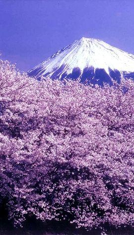 鬼太鼓座 おんでこざ 富士山 富士市