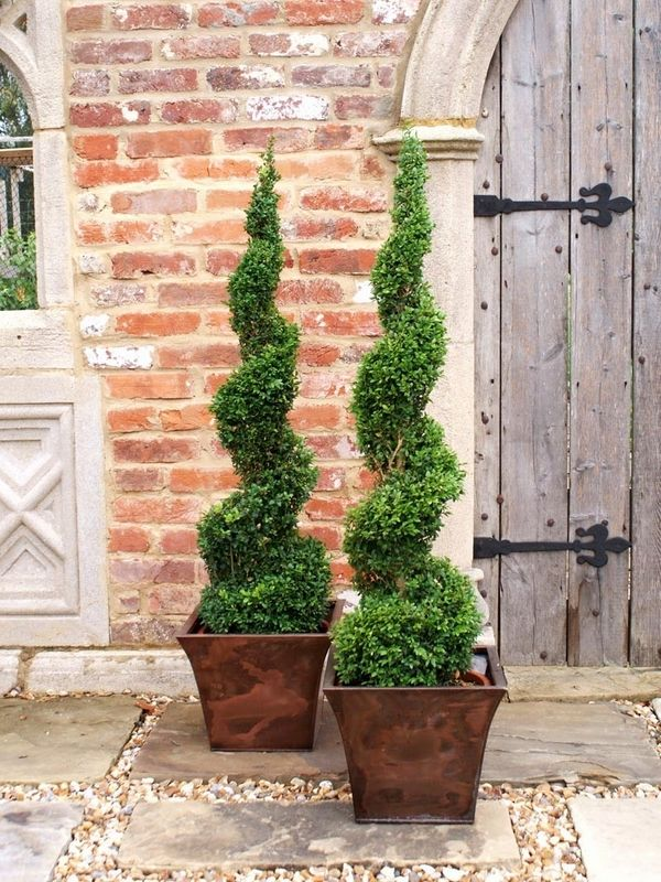 Spiral topiary plants patio decoration ideas plant containers