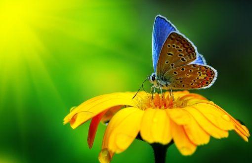 Butterfly on flower wallpapers