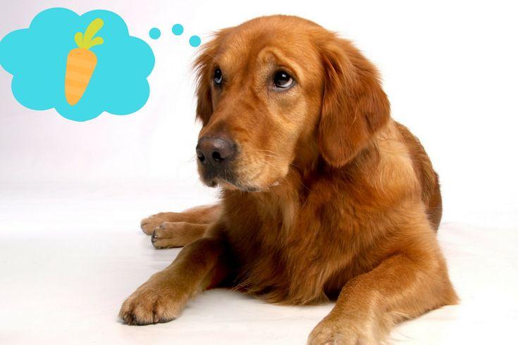 Gemüse und Früchte sind für eine ausgewogene Ernährung des Hundes genauso wichtig wie Fleisch und Innereien. Doch welche sind für Hunde geeignet?