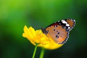 Creating a Butterfly and Hummingbird Garden